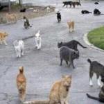 Conoce la ciudad de los gatos