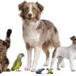 Cuando se celebra el Día del Animal?