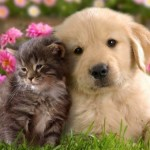 La importancia del Día del Animal: Imágenes