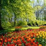 Impresionantes imágenes primaverales para compartir en Whatsapp