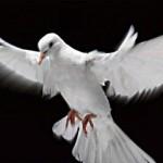 Un dia para fortalecer los ideales de paz