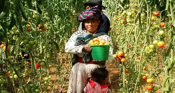 Mujer-rural (6)