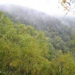 Imagenes postales de la naturaleza y el habitat