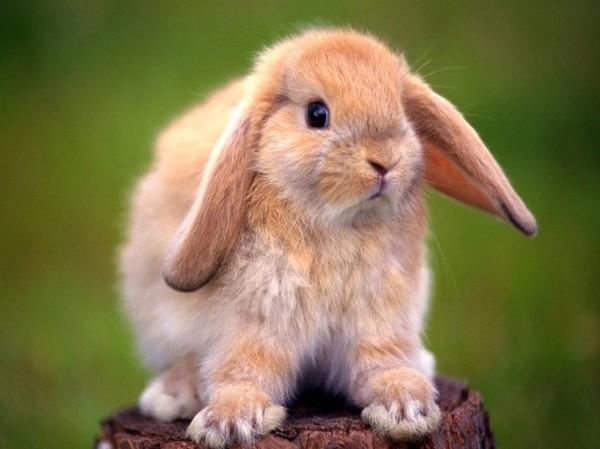 conejos-fotos-de-conejos