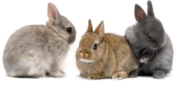 conejos1