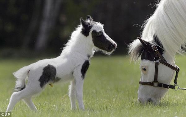 yeguaeinstein-caballo-pequeno