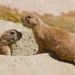 Como celebrar el Dia de la Marmota en familia?