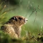 Imagenes divertidas para el Dia de la Marmota