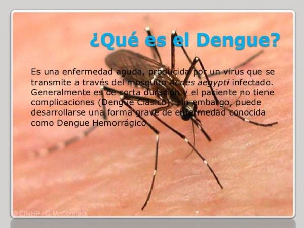 dengue.jpeg8