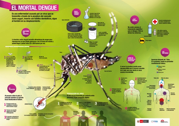 dengueinfo.jpg3 - copia