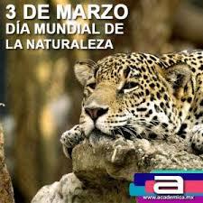 naturaleza8