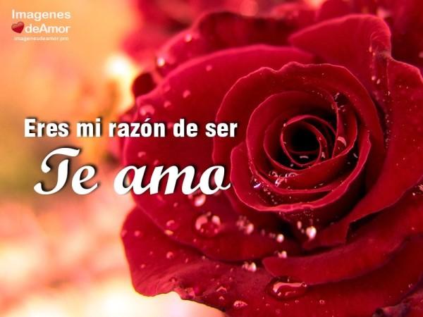 amor37