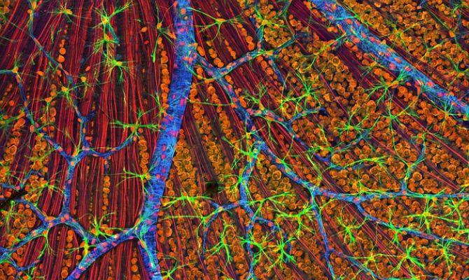 cuerpoelulas-vistas-desde-un-microscopio-electronico