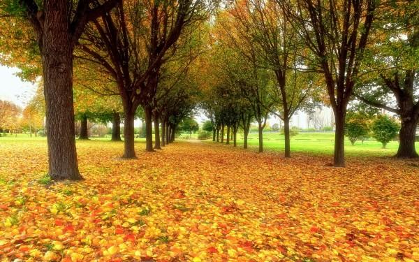 otoñoamarillento1
