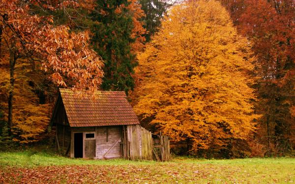 otoñoamarillento10