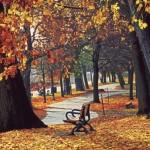 Bellas imágenes de paisajes otoñales para Fondos de Pantalla de PC o celular