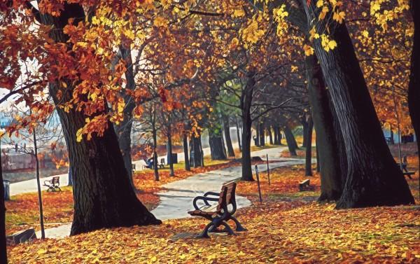 otoñoamarillento2