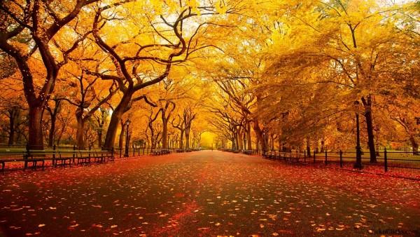 otoñoamarillento4