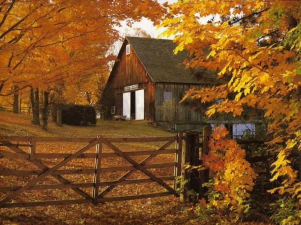 otoñoamarillento5