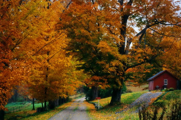 otoñoamarillento6