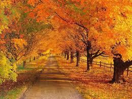 otoñoamarillento9