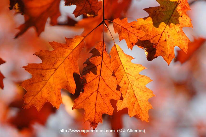otoñohojas3