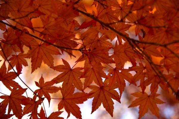 otoñohojas4