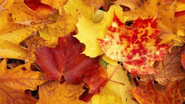 otoñohojas8