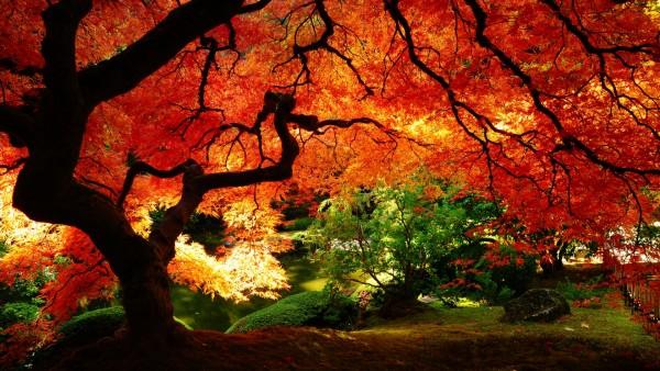 otoñorojizo1