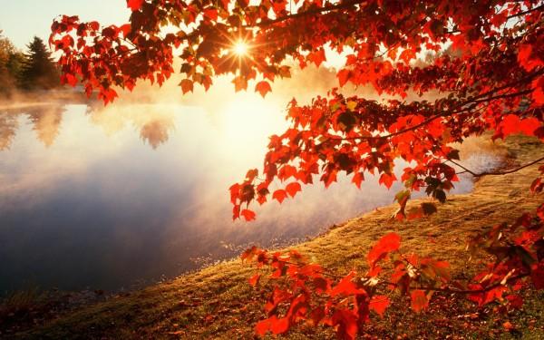 otoñorojizo2