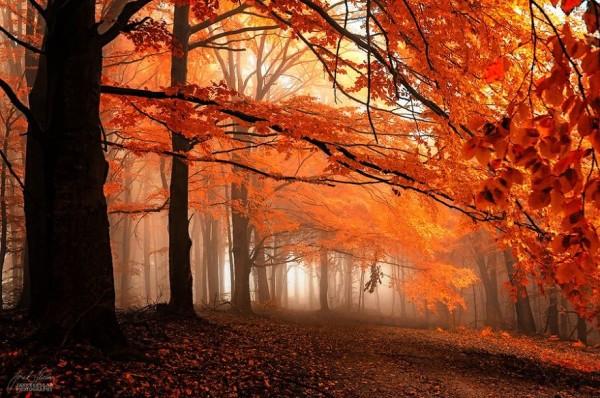 otoñorojizo5