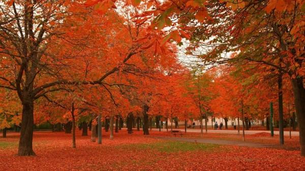 otoñorojizo6