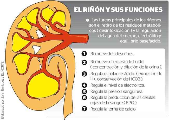 riñoninfofunciones