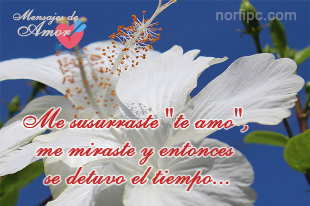 amor17