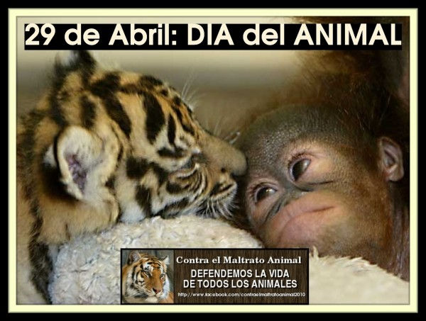animal.png10
