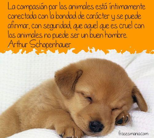 animalfrase33