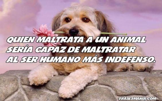 animalfrasemaltrato