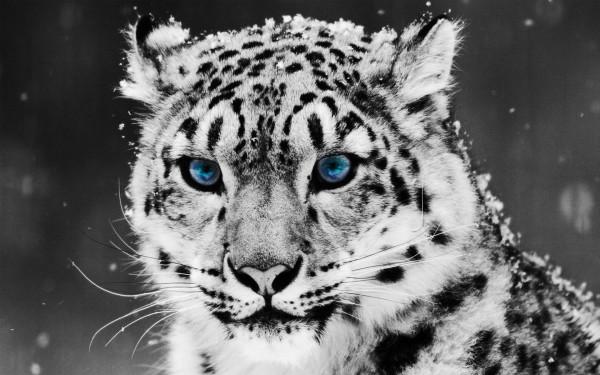animalwall.jpeg1