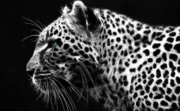 animalwallblynegro.jpg1