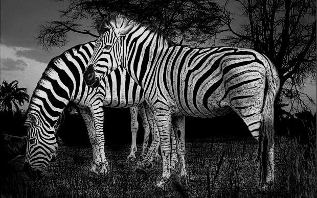 animalwallblynegro.jpg4