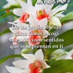 Imágenes hermosas con flores y dedicatorias de amor para compartir en redes sociales