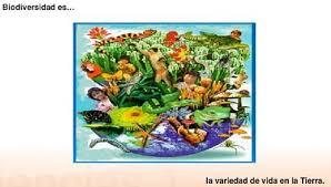 biodiversidadfrase