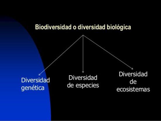 biodiversidadinfo.jpe3