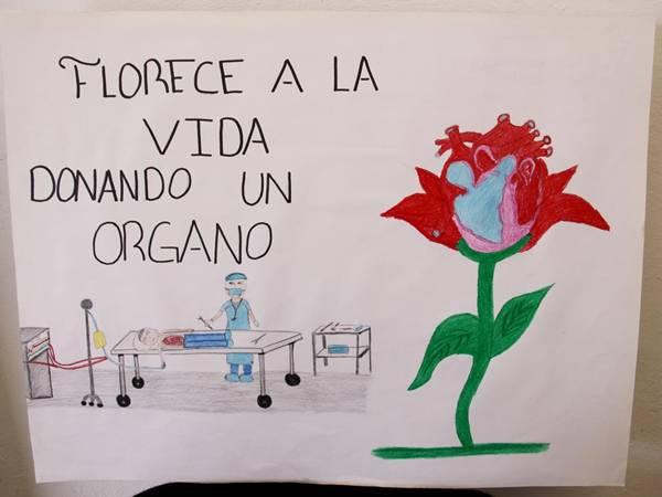 donacionorganos44