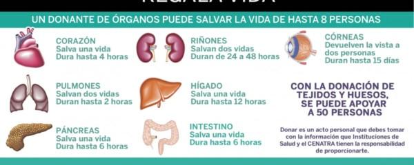 donacionorganosinfo.jpg3