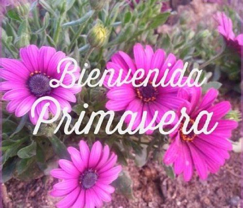 HolaPrimavera27