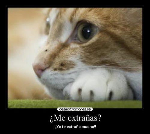 TeExtraNo24