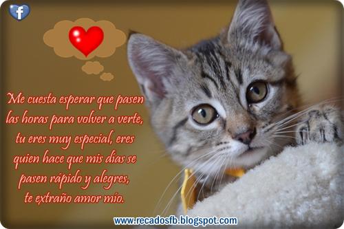 Imágenes Hermosas De Animales Para Decir Te Amo Te Quiero Y