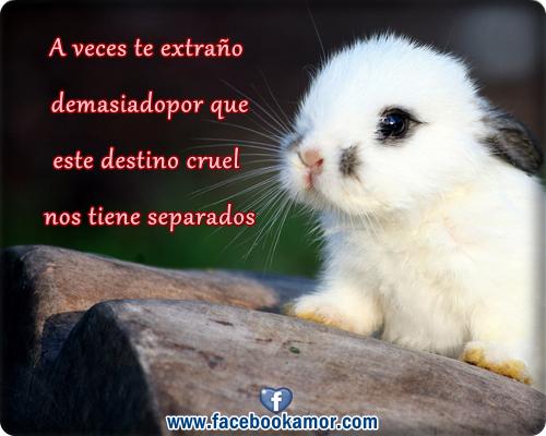 Imagenes Hermosas De Animales Para Decir Te Amo Te Quiero Y Te