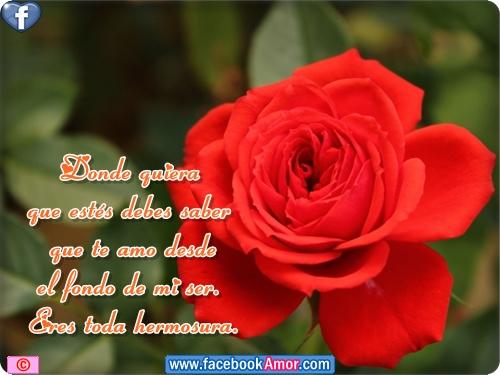 Rosas Hermosas Con Mensajes Www Imagenesmy Com